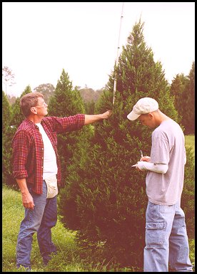 Measuring & Tagging Christmas Trees