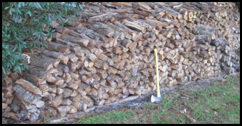 Stacked Water Oak Logs.