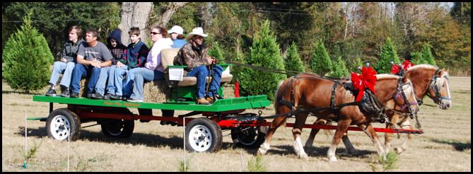 Haflingers Nugget & Murdock Pulling Wagon