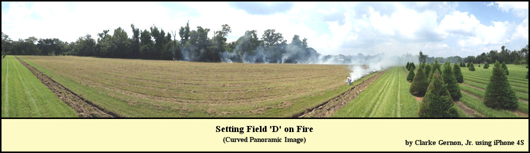 Controlled Burn in Field D, September 2013