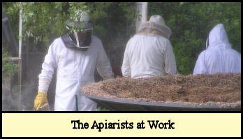 Billy, Lawrence & Barbara Lynchard beekeeping.