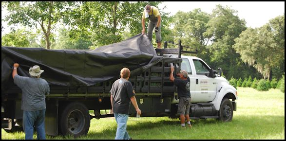 Jurassic Park trees being covered for trip to filming location.