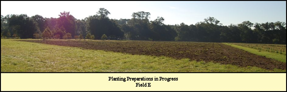 Planting preparations underway for Field E at Shady Pond Tree Farm