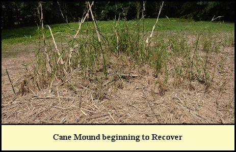 Cane Mound at Shady Pond.