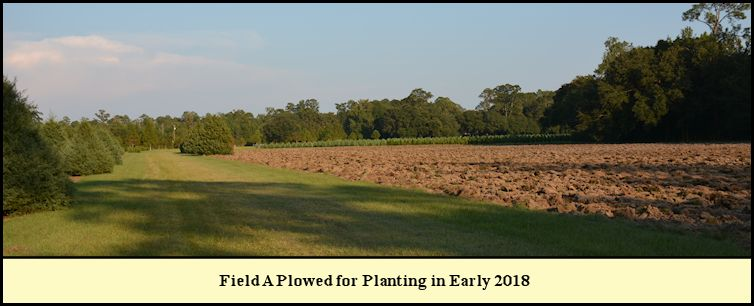 Shady Pond Tree Farm Field A plowed in  preparation for planting.