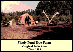 Original sales area at Shady Pond Tree Farm. Circa 1983
