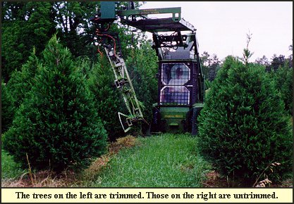 Christmas Tree Trimming (Shaping) at Shady Pond Tree Farm...